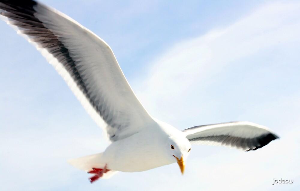Flying High by Jodi Webb