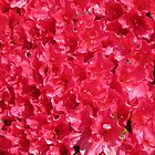 Total Vibrancy (Azalea) by lezvee