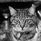 The Cat Next Door by Lewis Packman