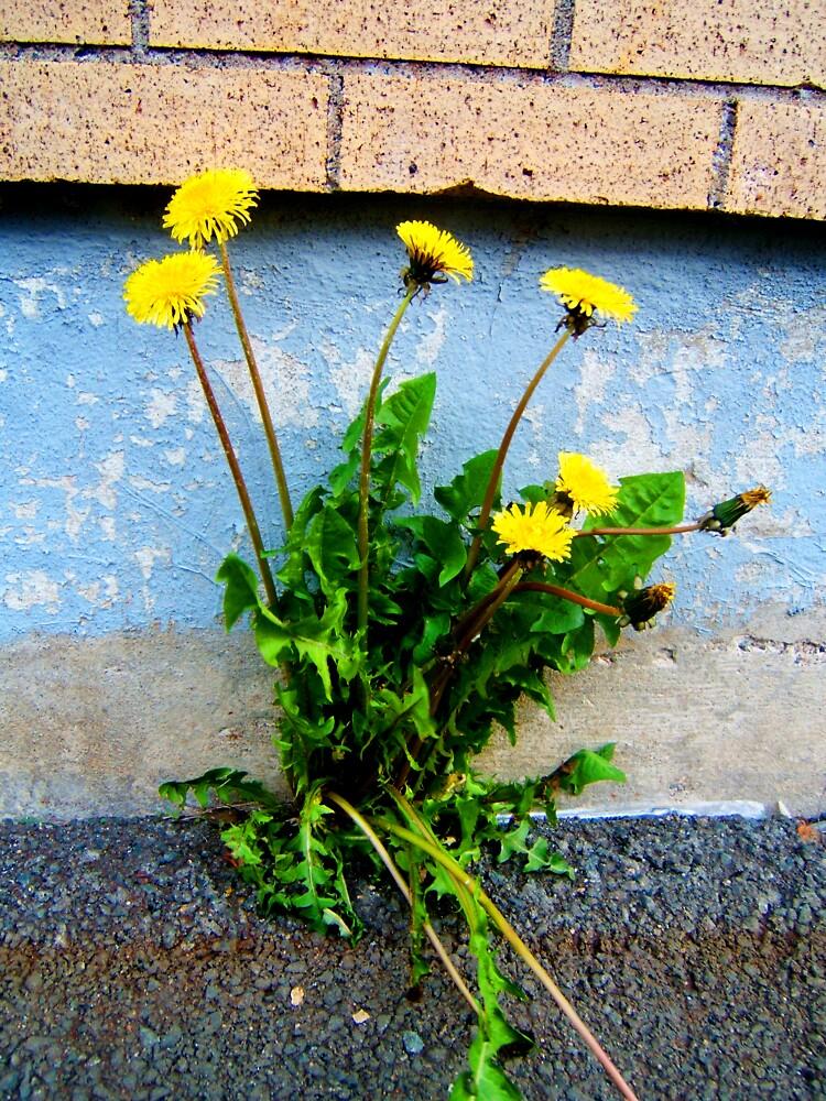 Flower or weed? by Stephanie  Williams