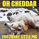OH CHEDDAR, YOU FURRY LITTLE PIG! by #PoptART products from Poptart.me
