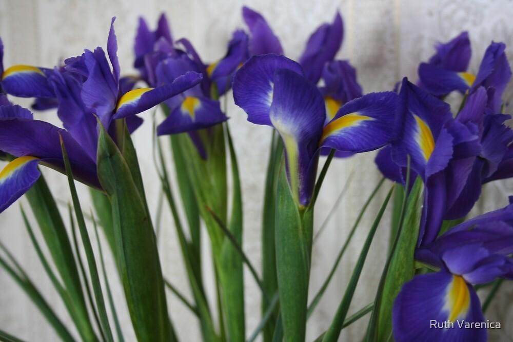 Purple Iris by Ruth Varenica