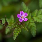 A Little Beauty by CarolM