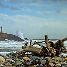 Cape Forchu Driftwood by Debbie  Roberts
