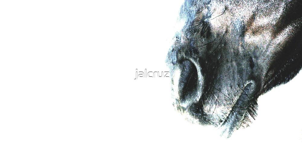 SILENT WHISPER OF HOPE by jalcruz