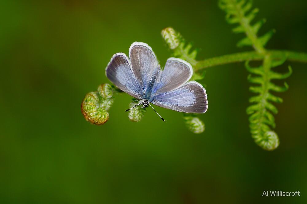 Butterfly by Al Williscroft