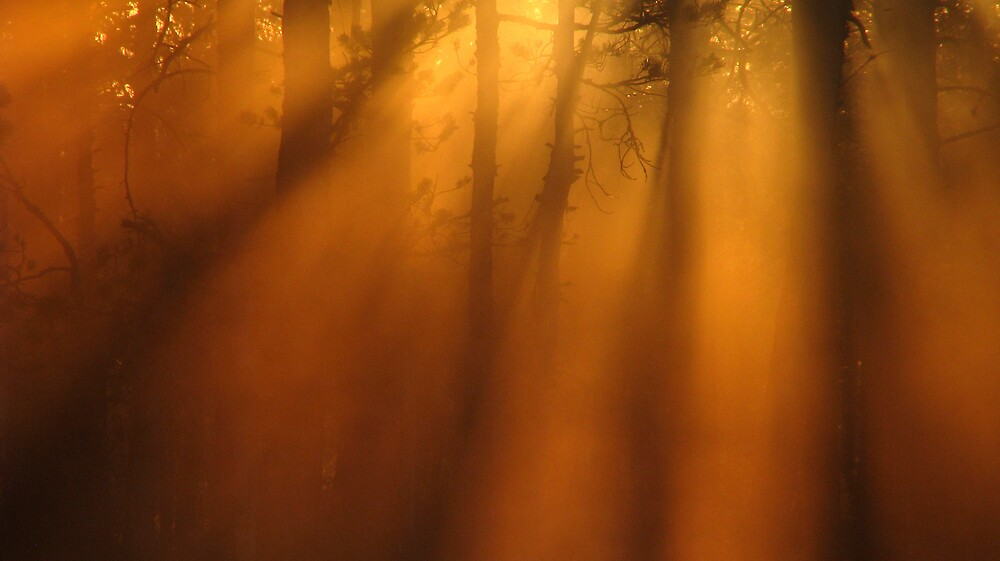 Forest, swamp, fog and light by Petri Volanen
