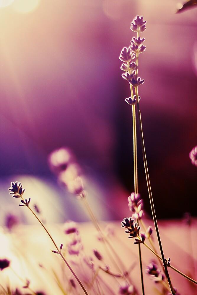 Purple Shine by Kjersti Andreassen