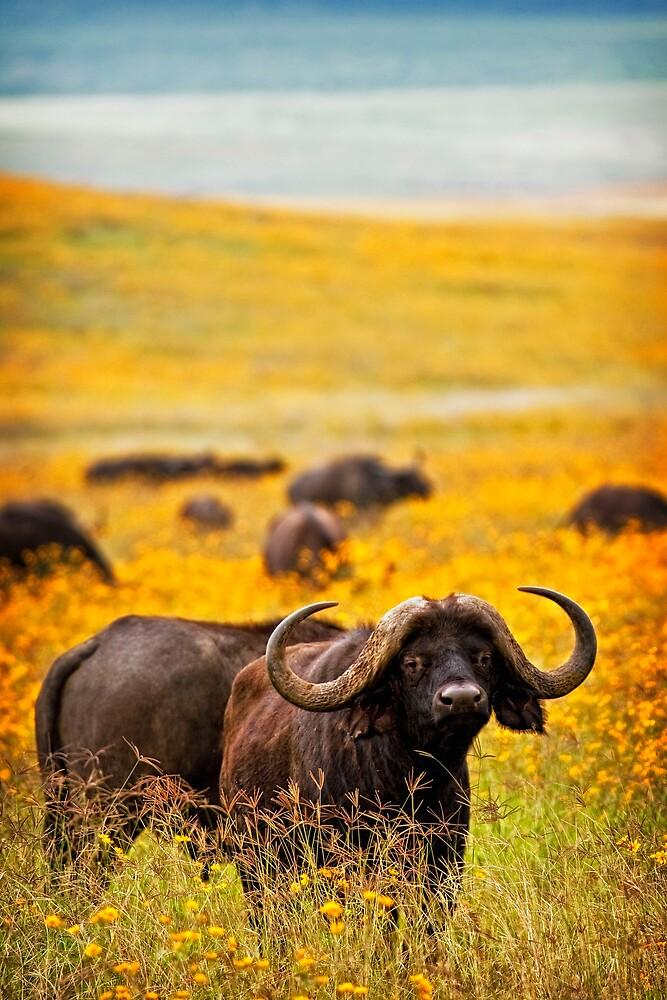 Cape Buffalo in Yellow by Scott Ward