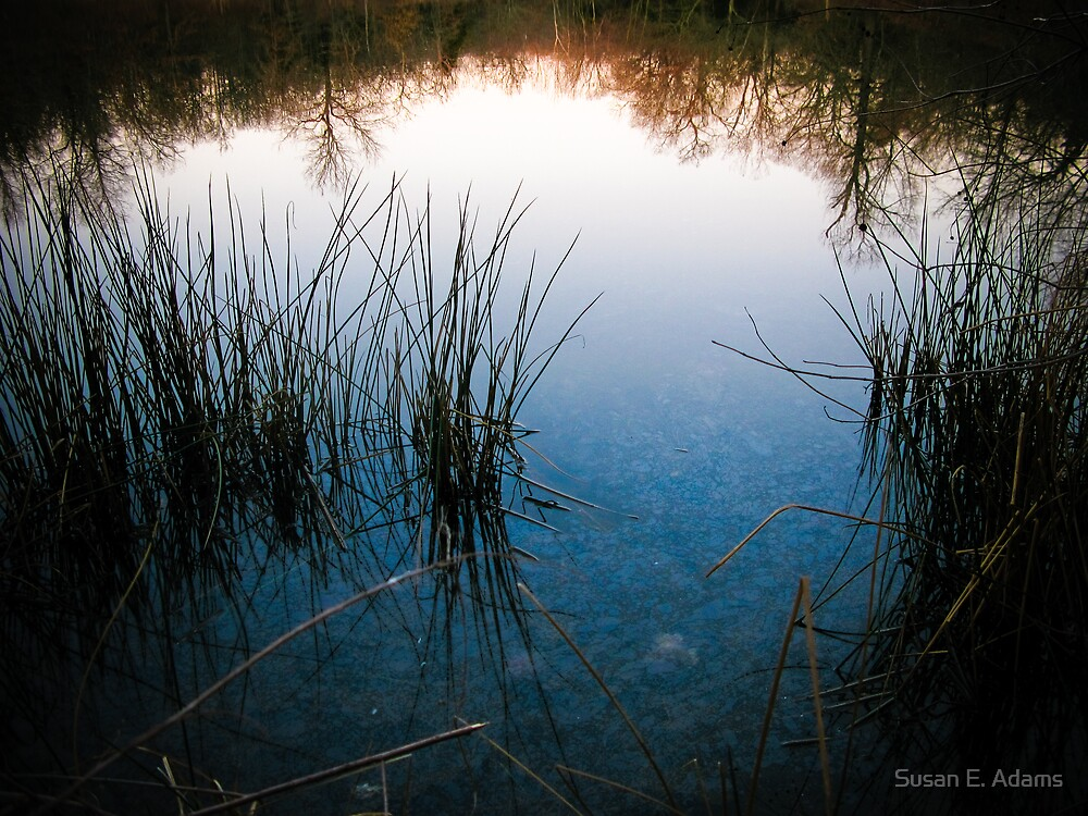 Pond Reflections by Susan E. Adams