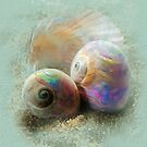 Sea Opals by Carolyn Staut