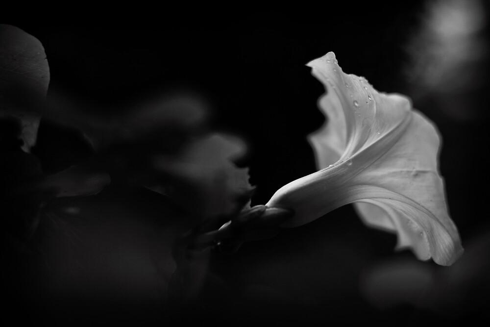 Glimpse by J. Scott Coile