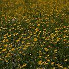 Yellow Summer by Stefan Trenker