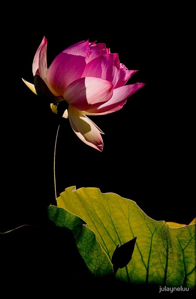 Lotus #1 by julayneluu