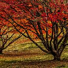 Autumn Flame by Bette Devine
