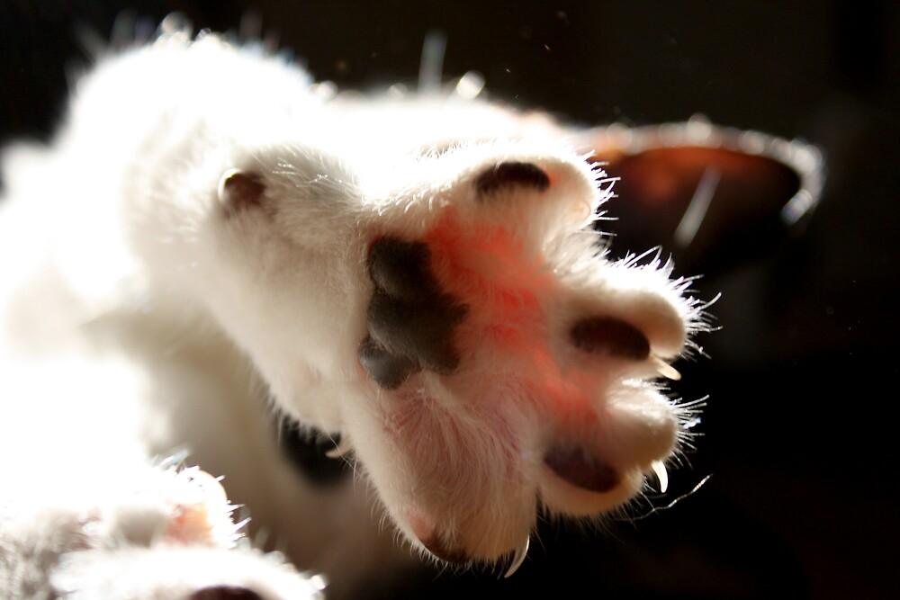Cat Paw by ceramicmatt