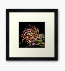 Rosehip with a twirl! Framed Print
