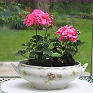 Flamingo Pink Geraniums by Pat Yager