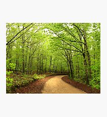 Canopy of Green Photographic Print