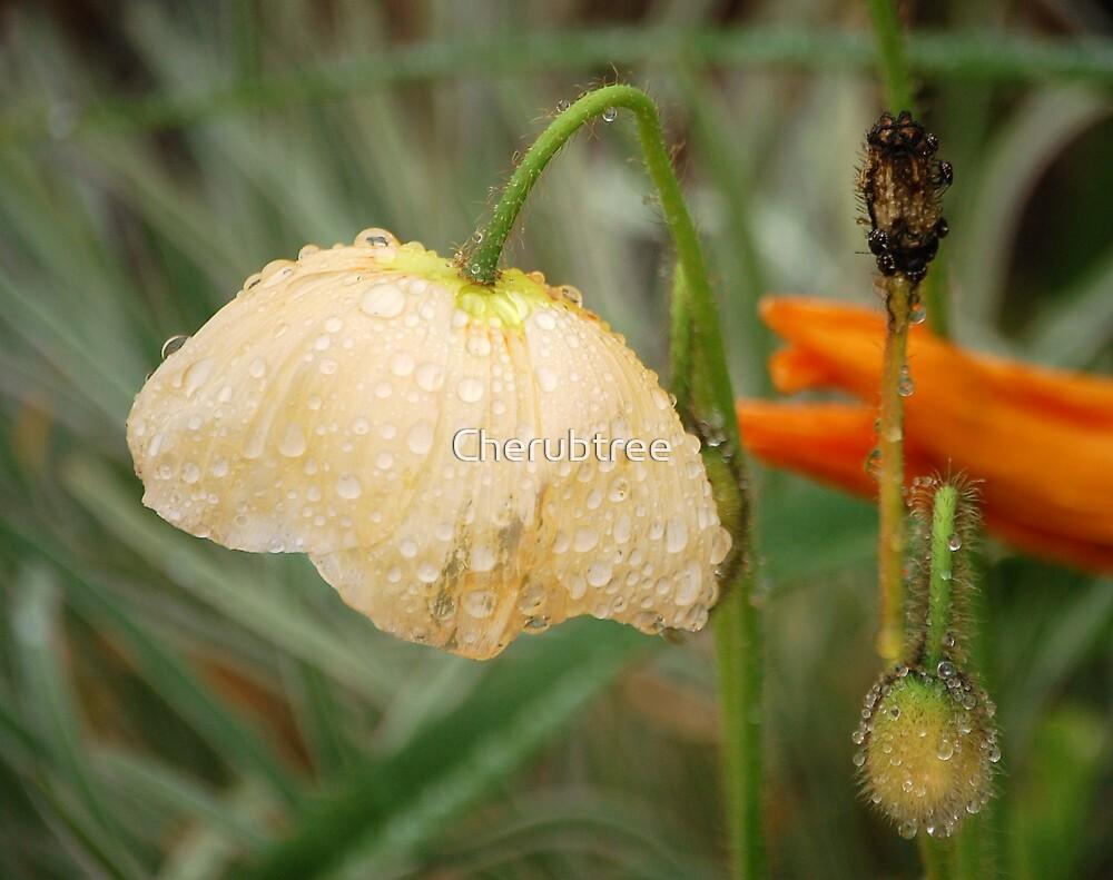Diversity Dewdrops: by Cherubtree