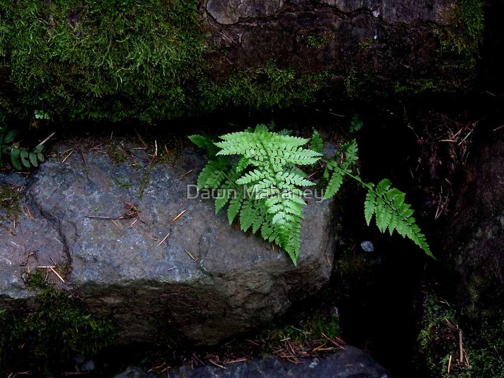 Fern In A Hard Place by Dawn Mahaney