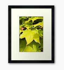 Green Japanese Acer Leaves in Spring (Portrait) Framed Print