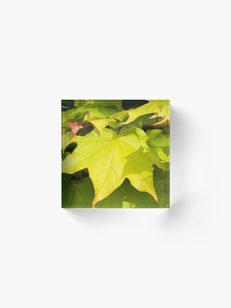Alternate view of Green Japanese Acer Leaves in Spring (Portrait) Acrylic Block