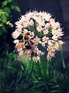 Honeybee by schizomania