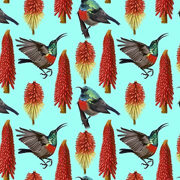 Double Collared Sunbird Aesthetic (L_Blue) by LukeMartinsArt
