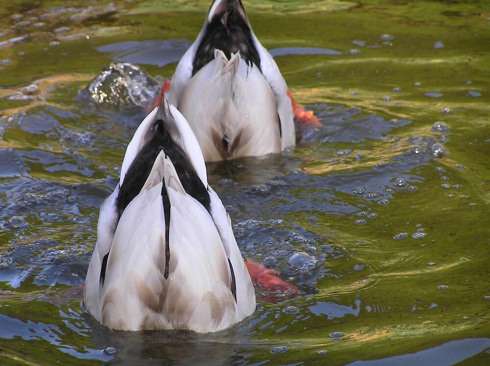 down under ducks by Christopher Biggs