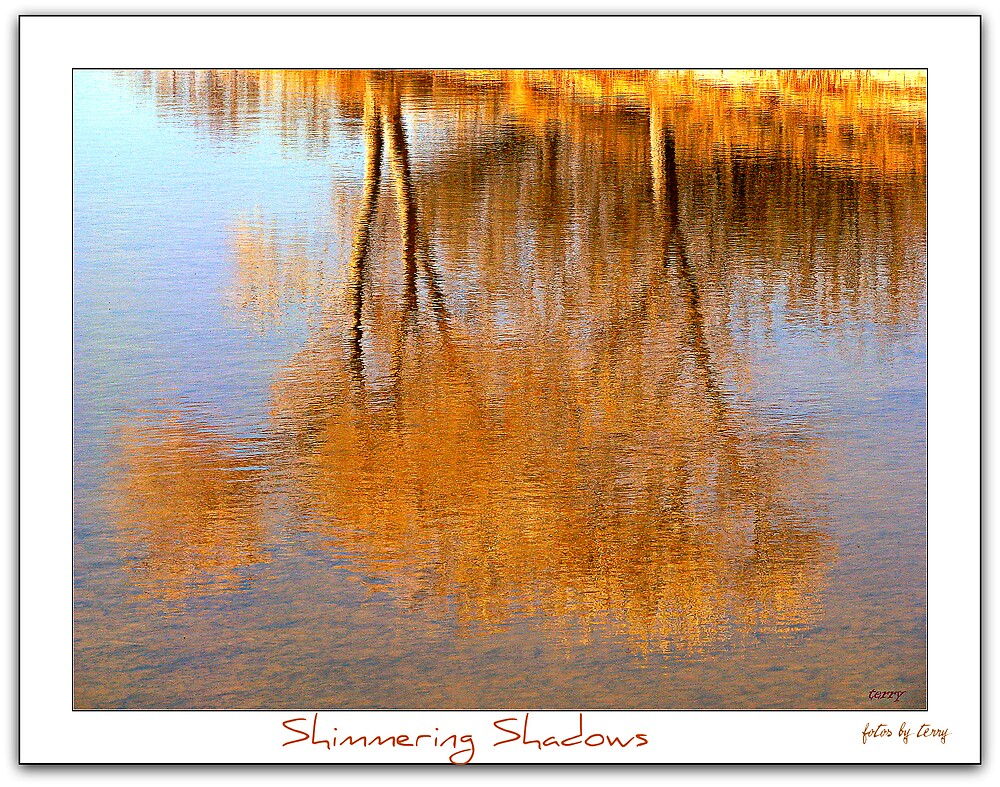 Shimmering Shadows by Terry Temple