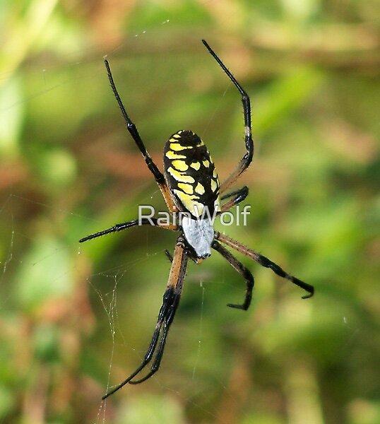 Yellow Garden Spider by RainWolf