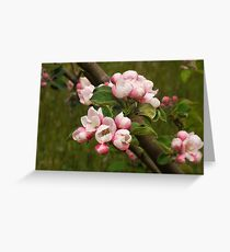 Spring Freedom Greeting Card