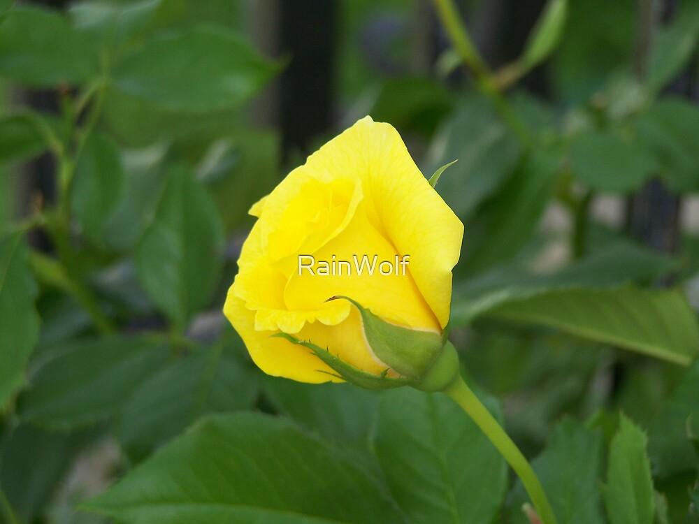 Yellow Rose Bud by RainWolf