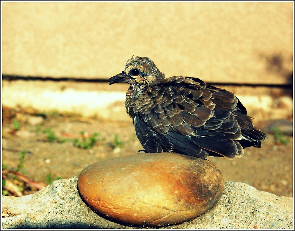 A bird by Justin Emery