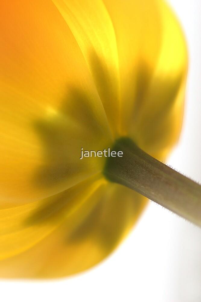 Lemon Canopy by janetlee