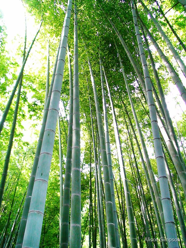 Bamboo Forest, Kamakura, Japan by Alison Simpson