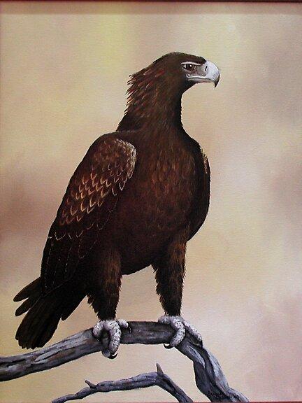 Wedgetail Eagle by Jennie Liebich