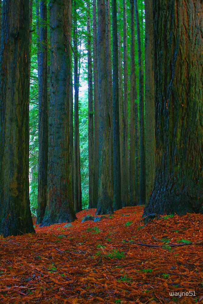 Otway  Redwoods. by wayne51