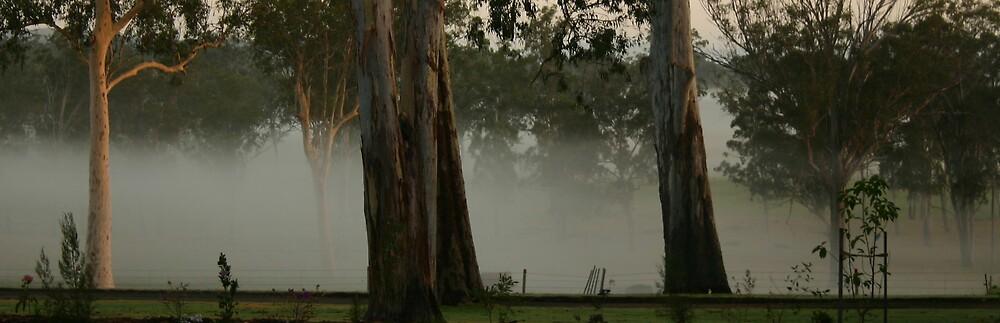Misty Morning by kerryedward