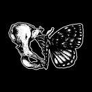 Butterfly II by SJ-Graphics