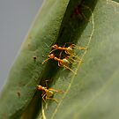 Green Ants by pollly