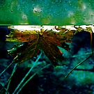 Submerged by pollly