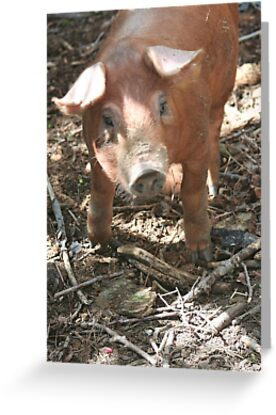 Too Cute For One Little Pig by Karen K Smith
