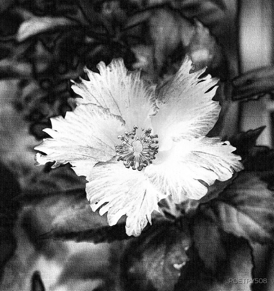 Flower; Black And White With A Cloth Canvas by POETRY508