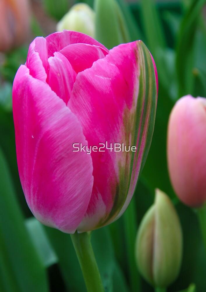 Pretty in Pink! by Skye24Blue