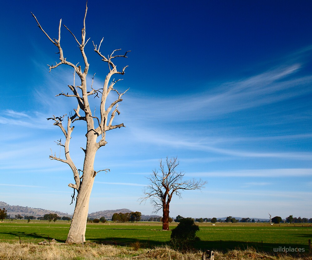 two trees - Rutherglen by wildplaces