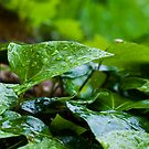 Raindrops keep falling on my head... by mausue
