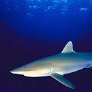Beneath The Caribbean: Shark by Epeaches