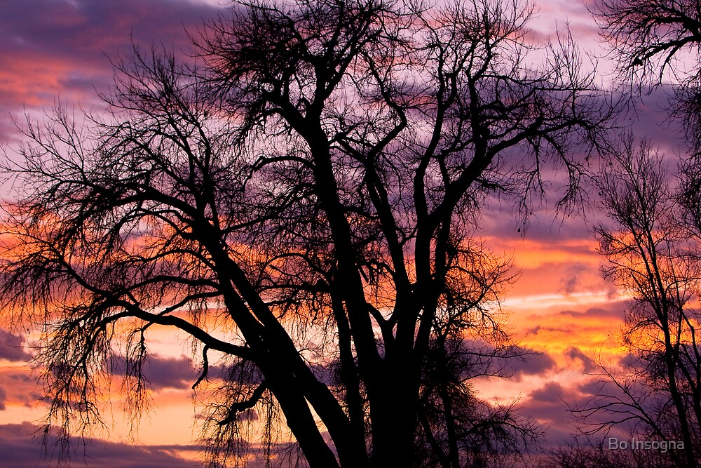 Boulder County Sunset by Bo Insogna